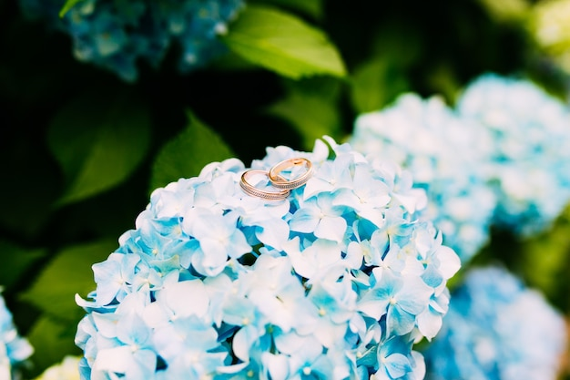 Trouwringen op de hortensia bloemen