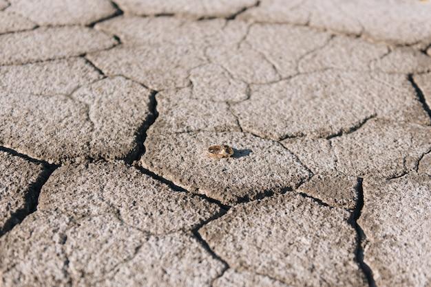 Trouwringen op een achtergrond van gebarsten aarde