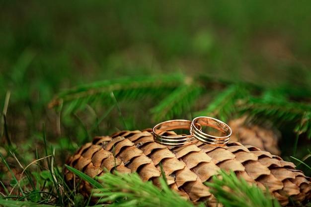 Trouwringen op een dennenappel. huwelijk, familierelaties, huwelijksparafernalia.