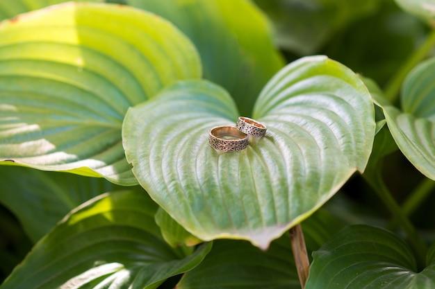 Trouwringen op grote groene bladeren