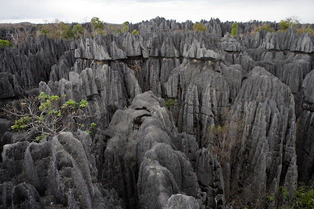 Tsingy de bemaraha. typisch landschap. madagascar.