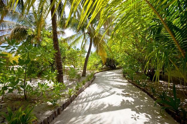 Tuin binnen het eiland van de maldiven. tropische bestemming zomervakantie