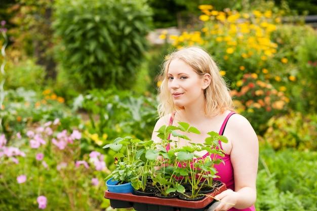 Tuin - het planten van aardbeizaailingen