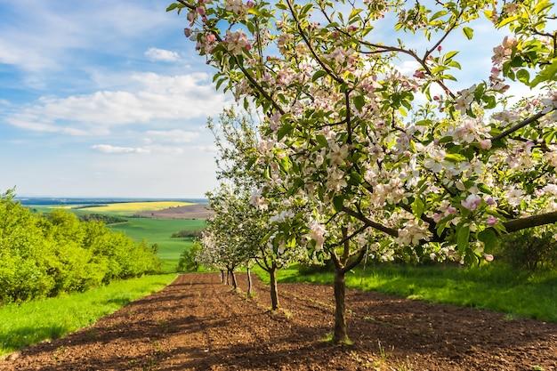 Tuin met bloeiende appelbomen