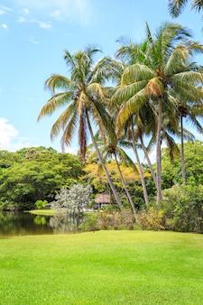 Tuin met palmbomen