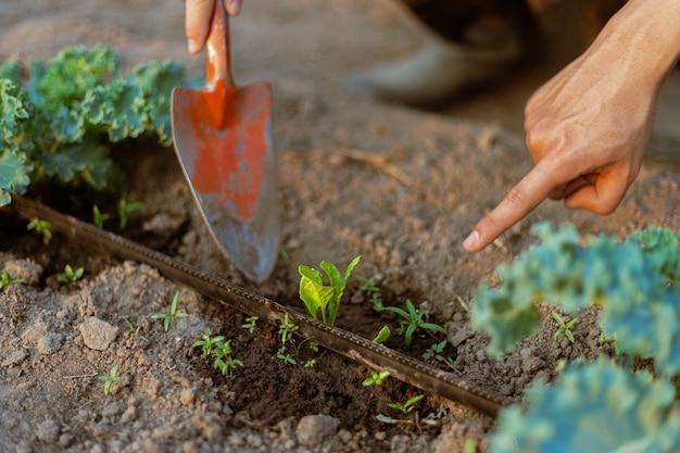 Tuinconcept een jonge boer die het vuil rond de planten schept om zuurstof gemakkelijk door de wortels te laten komen.