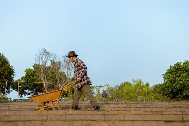 Tuinconcept een jonge mannelijke boer die een tuinkar tussen moestuinen in zijn kleine rustige tuin duwt.