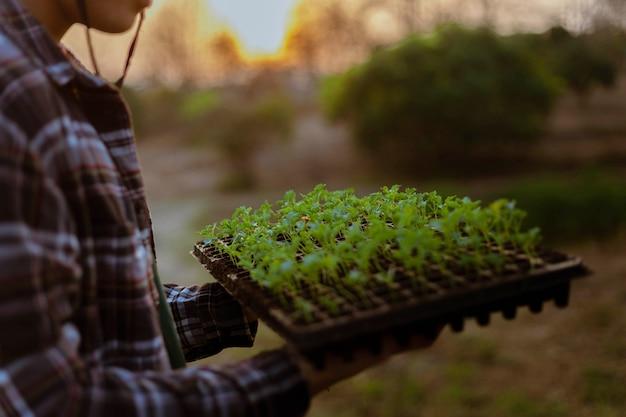 Tuinconcept meerdere groene planten verpot naar grotere ruimtes om de planten groter te laten groeien.