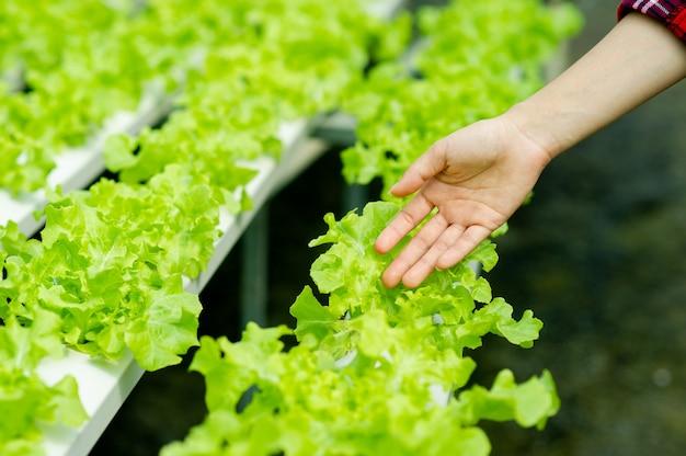 Tuinders en biologische sla in het perceel gezond eten concept biologisch voedsel verbouwen groenten om thuis te eten biologisch moestuin voor gezondheid, groene groenten