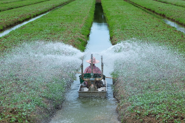 Tuinders geven water in het groenteveld.