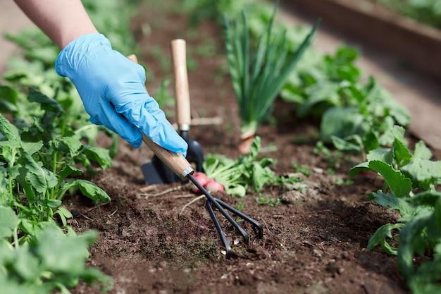 Tuinders handen planten en plukken groente uit achtertuin. seizoen werk.