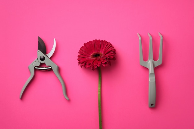 Tuingereedschap, bloem op roze, punchy pastel achtergrond.