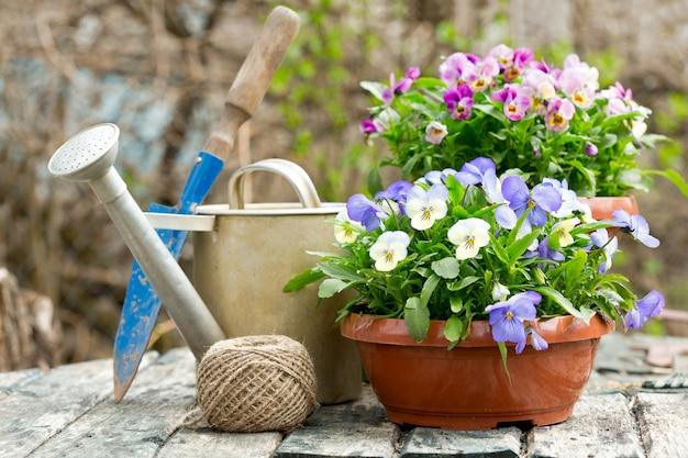 Tuingereedschap en kleurrijke viooltje bloemen in een lentetuin