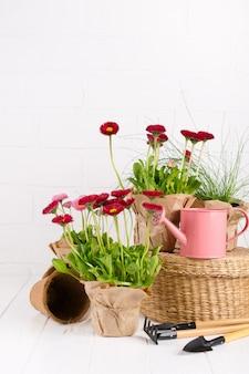 Tuingereedschap en madeliefjebloemen klaar voor opplant