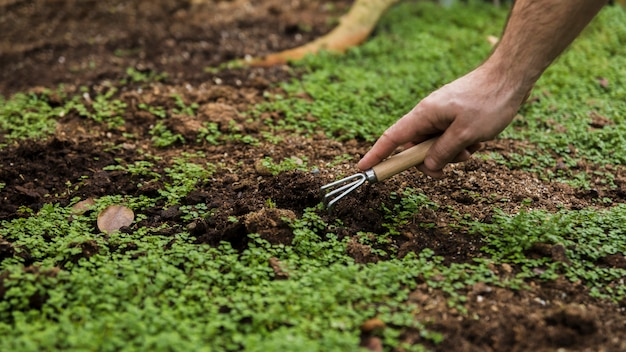 Tuinieren concept met vrouwelijke handen