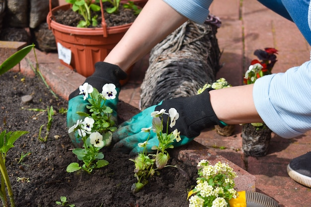 Tuinieren en tuinbouw.