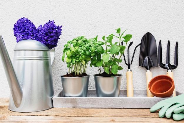 Tuinieren hobby concept, blauw paarse hyacint, groene munt en basilicum kruiden in metalen pot, kleine tuin hooivork of hark en schop, handschoenen, keramische pot, gieter op oude houten tafel, betonnen dienblad