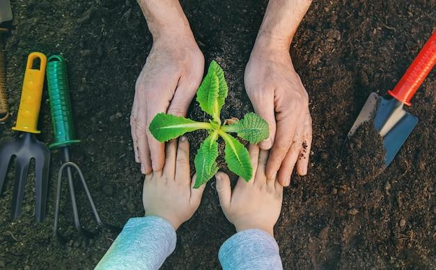 Tuinieren, planten planten in de tuin. tuin. selectieve aandacht. Premium Foto