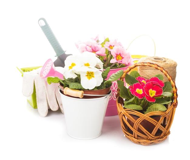 Tuinieren: primula bloemen met handschoenen, troffel en gieter op wit