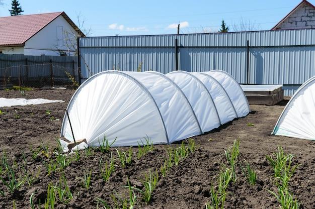Tuinkassen in de vorm van bogen bedekt met vezels. tuin. technologie voor het telen van groenten en fruit huishouden. dorp.