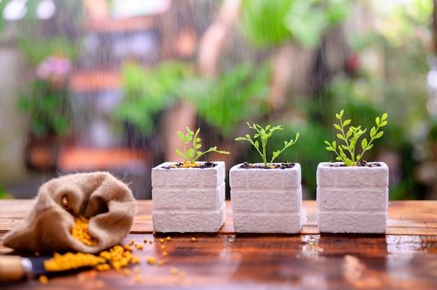 Tuinman die de boom plant en omhoog groeit. thuis tuinieren natuur en milieu hobby. ontspan en recreatie in het voorjaarsoogstseizoen thuis.