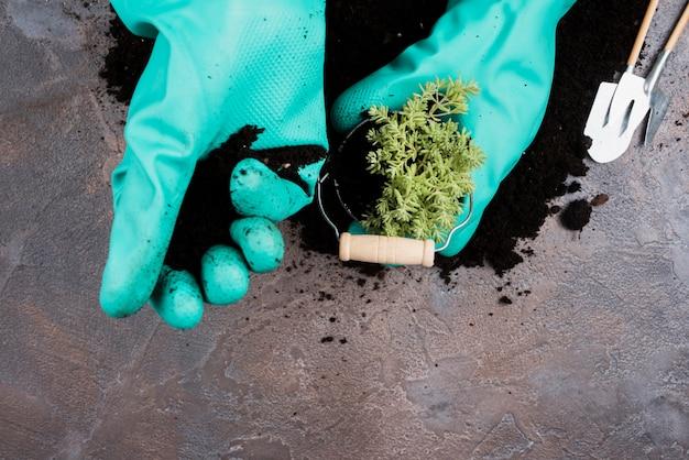 Tuinman die een groene plant in emmer plant