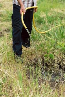 Tuinman die een kleine groeiende boom op een landbouwbedrijf water geeft. een man groeit een walnotenboom. slang die de tuin water geeft