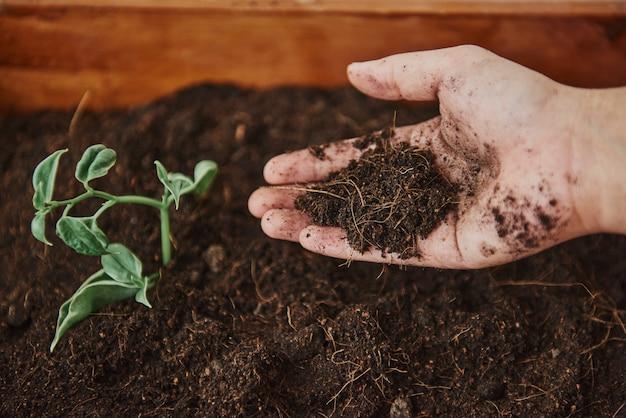 Tuinman die kruiden kweekt in een plantenbak