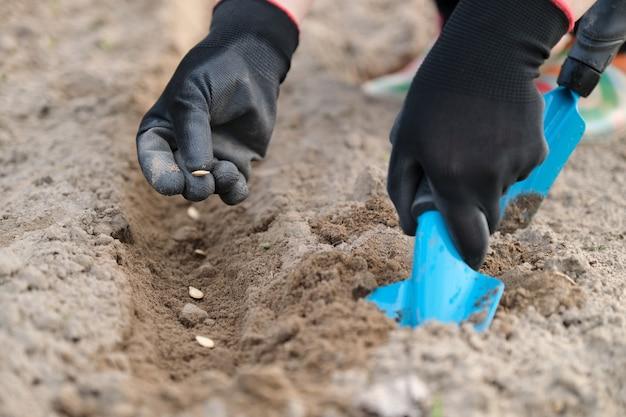 Tuinman die pompoenpitten in de grond plant