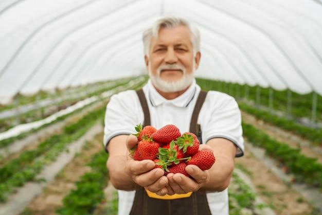Tuinman die rijpe aardbeien in handen houdt