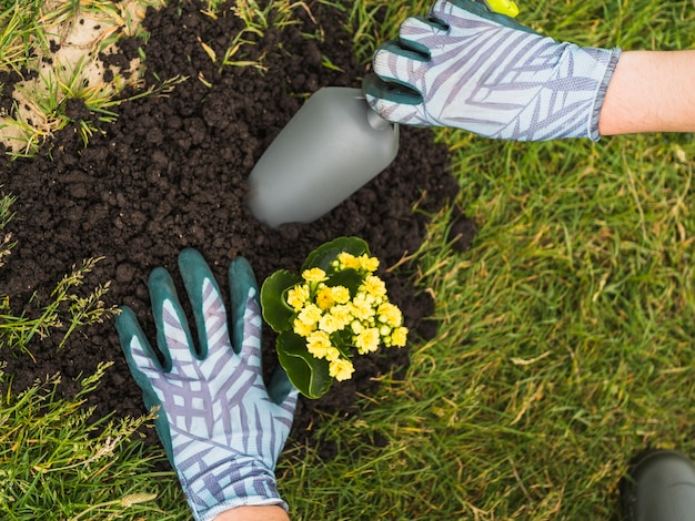 Tuinman die succulente installatie in grond plant