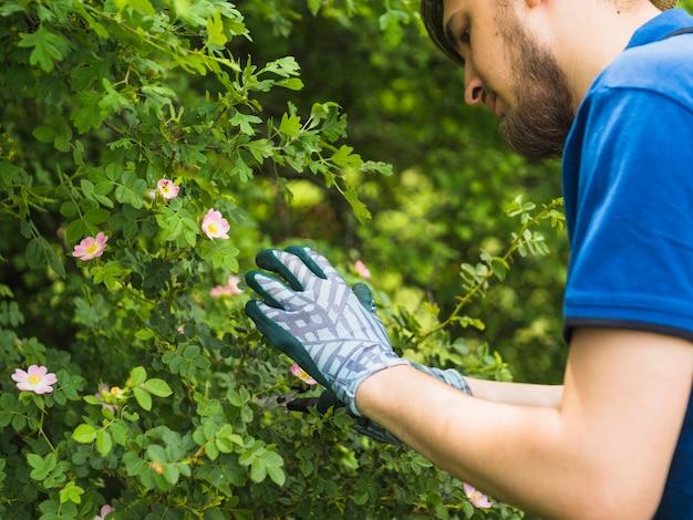 Tuinman die verse groene installatie bekijkt