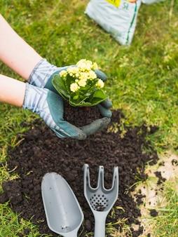 Tuinman die zaailingen draagt die in grond moeten worden geplant