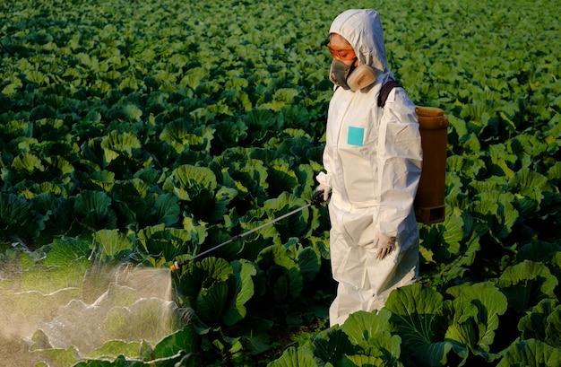 Tuinman in een beschermend pak spuit kunstmest en insecticide op enorme koolgroenteplant