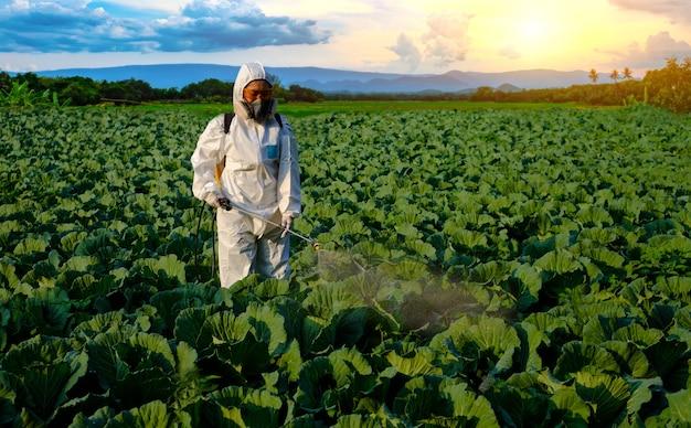 Tuinman in een beschermend pak spuit meststof met pesticiden op enorme kool groenteplant bij berg en zonsondergang