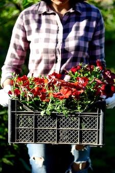 Tuinman met bloemen in een krat