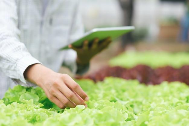 Tuinman oogst groenten uit de moestuin. Premium Foto