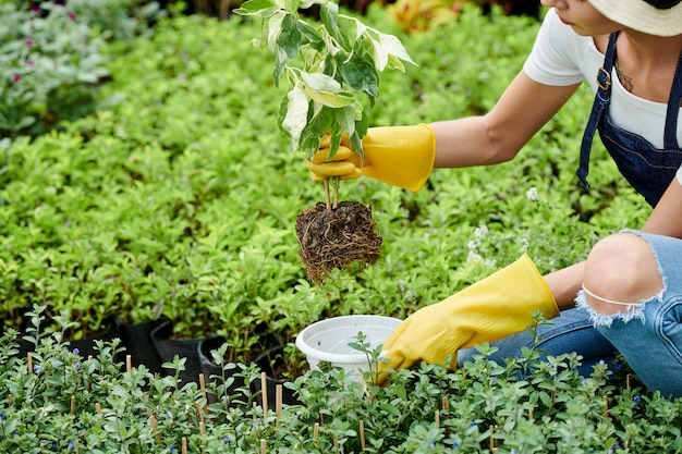Tuinman plant aanbrengend pot
