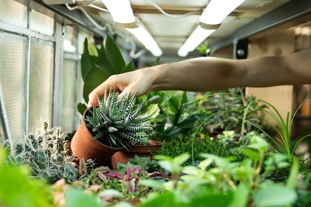 Tuinman verzorging van planten in de kwekerij close-up