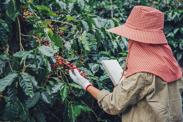 Tuinmannen die een notitieboekje vasthouden en koffiebomen, koffiebonen en oogsten bestuderen.