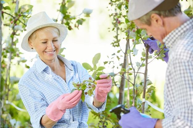 Tuinmannen inspecteren planten