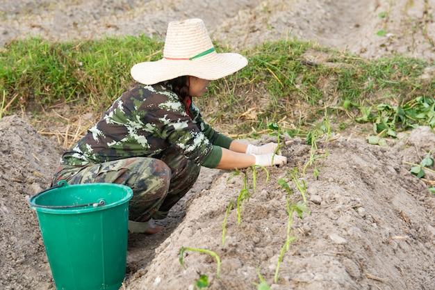 Tuinmanvrouw die bataten in haar tuin kweken Premium Foto