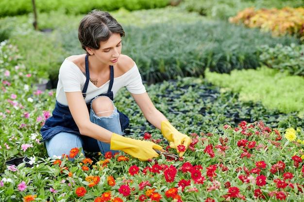 Tuinwerker die bloemen snoeit