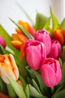 Tulp. mooi boeket tulpen. kleurrijke tulpen.