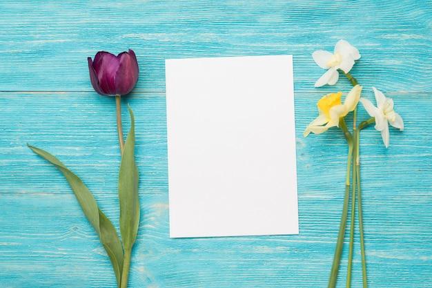 Tulp, primula's, papieren kaart, turquoise tafel