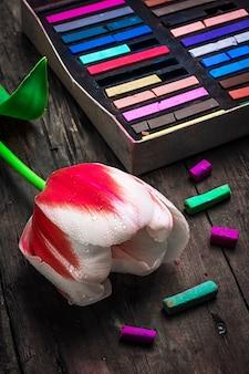 Tulp rood witte kleur en doos met kleurpotloden