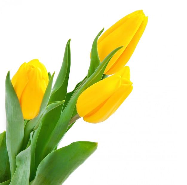 Tulpen boeket