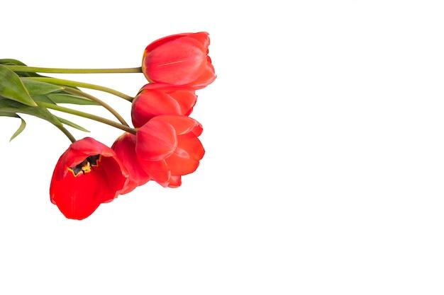 Tulpen copyspace. boeket rode tulpen