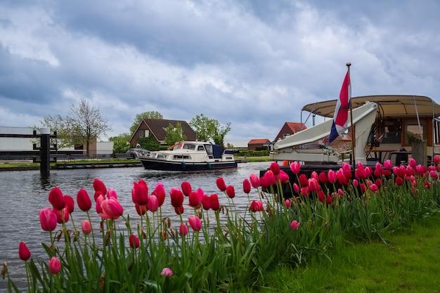 Tulpen groeien aan de oever van een waterkanaal in het nederlandse dorp lisse