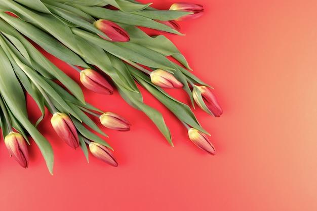 Tulpen in een hoek van het frame op een rode achtergrond